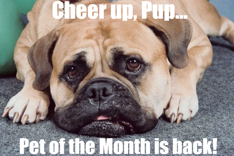 Cheer Up, Pet of the Month is Back