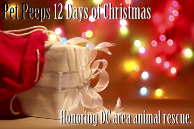 12 Days of Christmas - Pet Peeps