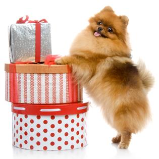 http://petpeeps.biz/wp-content/uploads/2013/09/dog-gifts.jpg