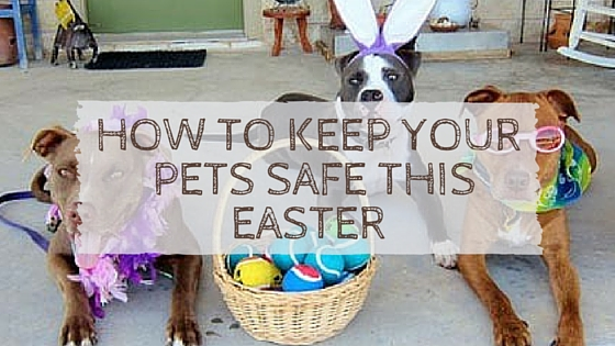 keep pet in home Tips for keeping a pet-friendly home clean and odor-free  a pet will fill your home with love, but it will also fill your home with fur, odors and lots of mess  use grooming wipes and keep .
