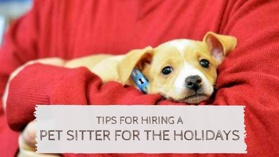 tips on hiring a pet sitter for the holidays   pet peeps best in