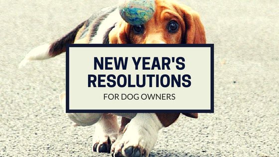 New Year's Resolutions For Dog Owners