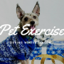 Pet Exercise Winter