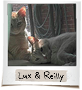 vip cats lux reilly