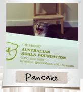 vip cats pancake