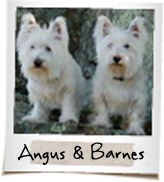 vip dogs angus and barnes