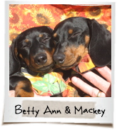 vip dogs betty ann and mackey