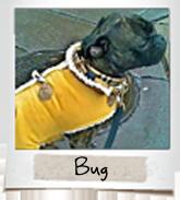 vip dogs bug