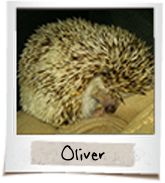 vip exotic pets Oliver
