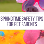 Spring Safety Tips For Pets