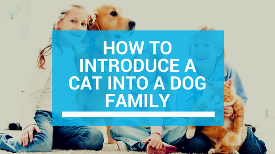 How To Introduce Dog Into Cat Household
