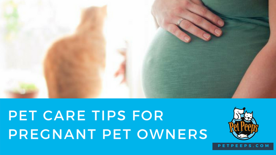 pregnant pet owners tips