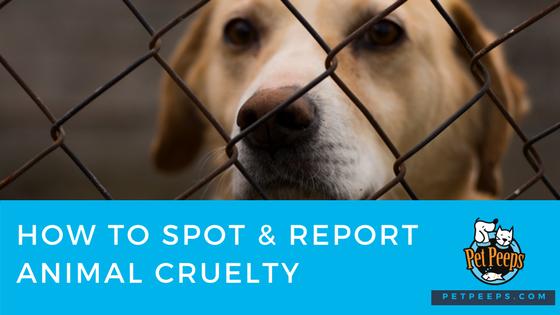How To Spot & Report Animal Cruelty In Your Area - Pet Peeps