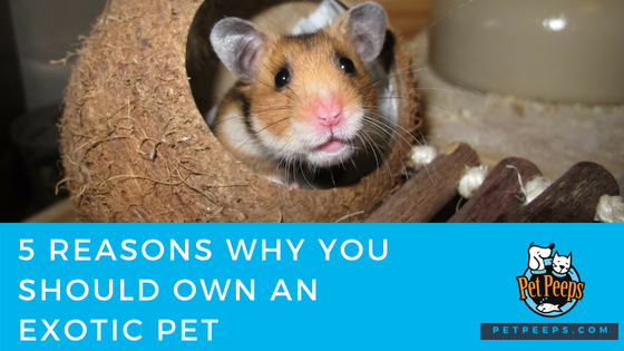 5 Reasons Why You Should Own An Exotic Pet